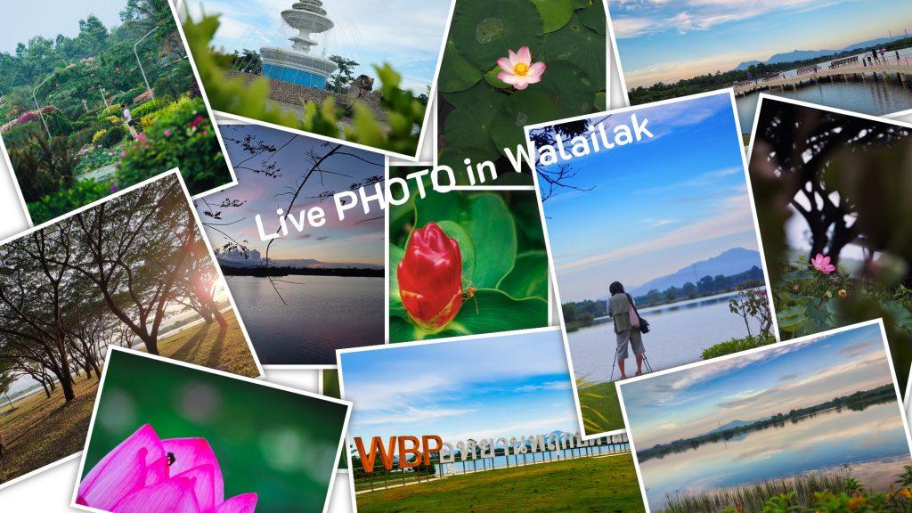 บุคลากรส่วนแผนงานและนักศึกษาเข้าร่วมกิจกรรมสร้างภาพลักษณ์มหาวิทยาลัย เรียนรู้และถ่ายภาพในกิจกรรม Live PHOTO in Walailak #1